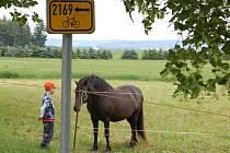 Cestou se můžeme zastavit v Nahém Újezdci a pozorovat pasoucí se koně.
