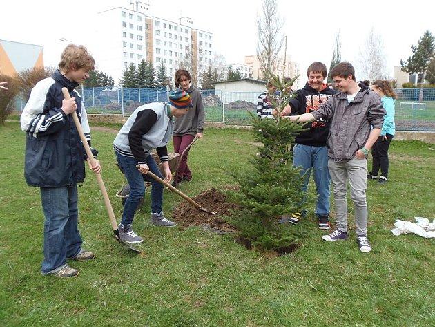 JAKO DAR, ke Dni země, dostala základní škola strom. Byla jím jedle, kterou škola dostala od Lesů města Stříbra.