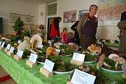 Výstava hub na tachovském gymnáziu