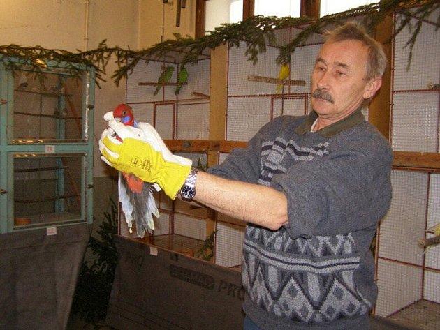 Chovatelé se pochlubili okrasným ptactvem
