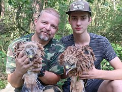 Ornitologové kroužkují luňáky, hlavně na Tachovsku.