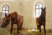 Koně se na čas vrátili do jízdárny. Snímek je z místa jejich dočasného ustájení.
