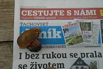 Hřib kovář nalezený u Lestkova.