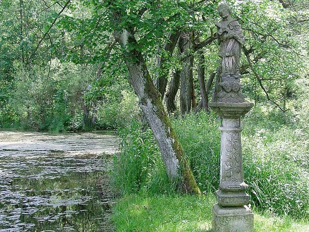 SOŠKU v obci Mýto najdete v rybníce než vedle rybníka. Časem JI voda zaplaví úplně.