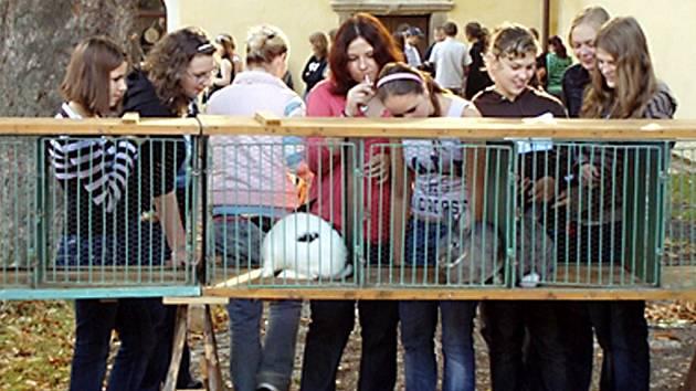 Na stříbrském chovatelském trhu byl velký zájem o králíky. K vidění byly nejrůznější rasy.