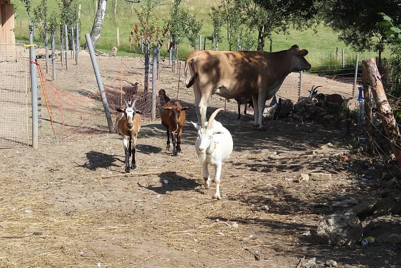 Z farmy v Souměři.