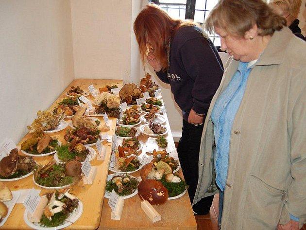 V tachovském muzeu bylo v neděli vystavenou 218 druhů hub, rostoucích na Tachovsku.
