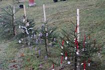 Část vánočních stromků v Chlumské.
