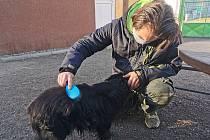 Psi z tachovského útulku. Foto Gabriela Jägerová