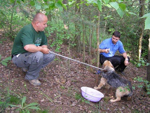 Psa někdo uvázal v lese a ponechal osudu