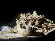 Kostel Nanebevzetí Panny Marie odhalil několik zajímavých archeologických nálezů.