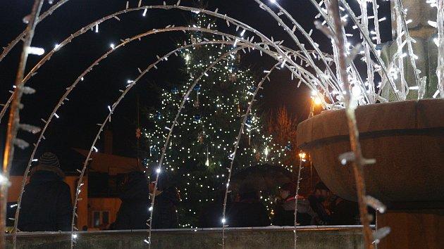 Vánoční stromy na Tachovsku