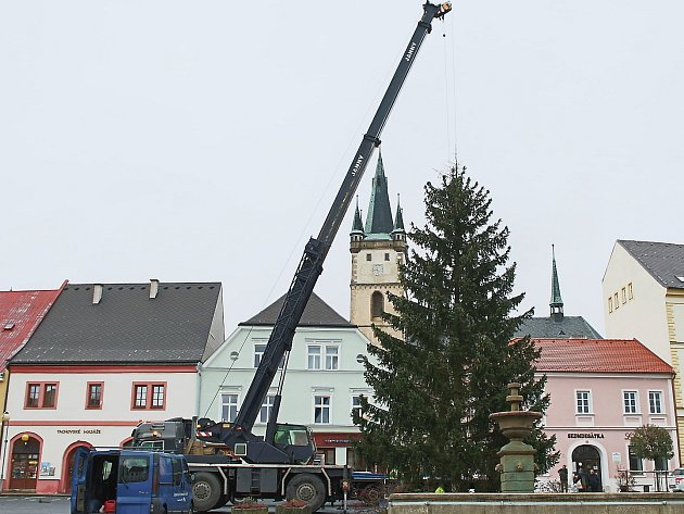 Vánoční strom v Tachově už stojí, ozdobí ho tisíce nových světélek.