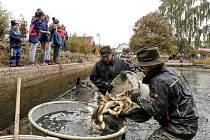 Kohouťák vylovili po deseti letech, ryby chytaly i děti do ruky