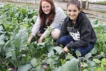 VÝPĚSTKY školních skleníků představily při Dnech školní zahrady také studentky Aneta Szerencsesová (vpravo) a Kristýna Kormošová.