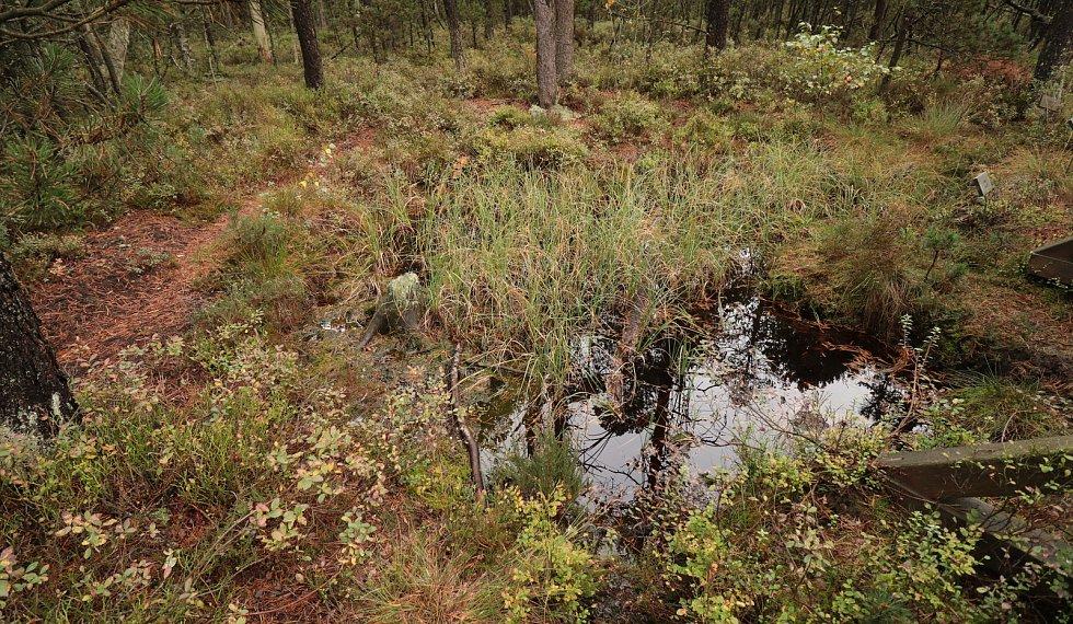 Vrchovištní rašeliniště u Lesné na Tachovsku.