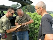 Ornitologové dávají batůžky s vysílačkami luňákům červeným.