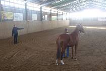 KATEŘINA SANTAROVÁ (na snímku vlevo) předváděla, jak koni opravdu porozumět. Dnešní exhibice se zúčastnila i Aneta Bolehovská (vpravo) s klisnou Pretty Woman