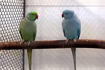 Ve Stříbře se uskutečnil další ročník  Propagační výstavy okrasného ptactva
