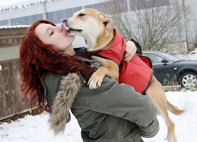 V tachovském útulku pro psy je v současné době patnáct psů