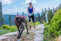 Vyběhněte v neděli v Plané do terénu a podpořte útulek pro psy.