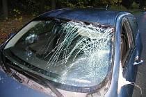 Jelen srážku nepřežil, řidič se zranil