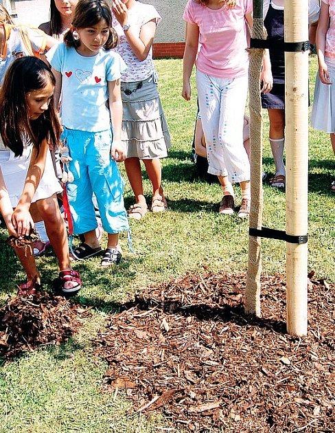 Představitelé všech tří škol potvrdili spolu s dětmi spolupráci vysazením lípy