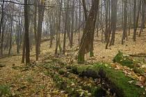 Suťová javořina na severním svahu Vlčí hory.