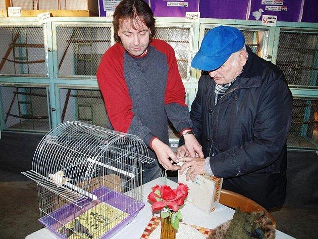 ZDENĚK KRAJÍC ze Stříbra (vpravo) kupuje pár zebřiček. Přinesl si na ně speciální bedničku. Drobné ptactvo chová hlavně pro potěchu.