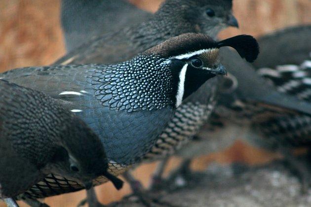 Chovatel nejen ptactva Martin Herink zÚšavy se stará ořadu živočichů.