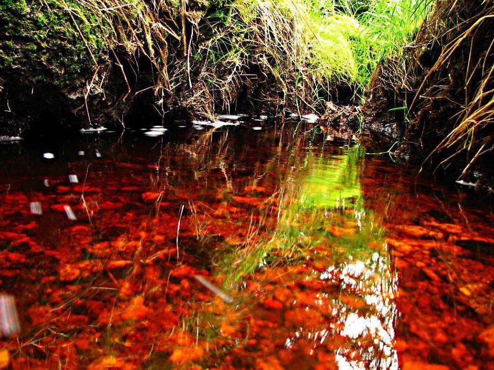 Hraniční potok u přírodní rezervace Pavlova Huť.