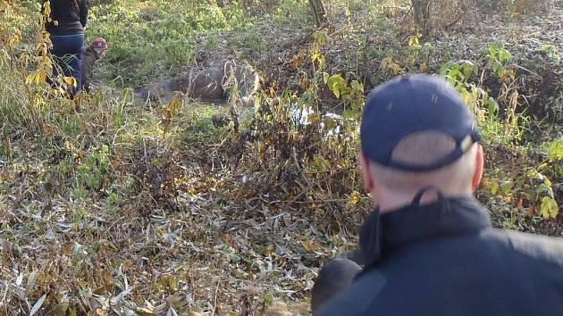 Kobyla nešťastnou náhodou spadla do zabahněného koryta (na fotografii), bez pomoci by se ven nedostala.
