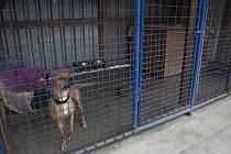 Koprologické vyšetření, tedy analýzu trusu, podstoupili už druhým rokem psi z útulku u Šmudlinky.