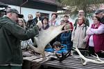 Před Domem přírody v Kladské viděli návštěvníci trofejní paroží i slyšeli ukázky hlasů jelenů.