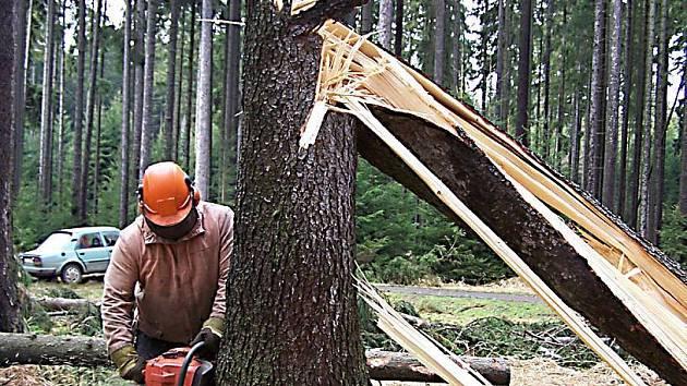 Pracovníci v lese mají plné ruce práce.