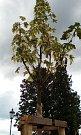 SOUČÁSTÍ VEGETAČNÍCH ÚPRAV zámeckého nádvoří je  výsadba 22 kusů listnatých stromů a 2 930 ks keřů a trvalek.