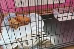 Kočičí bojovnice se stále zotavuje.