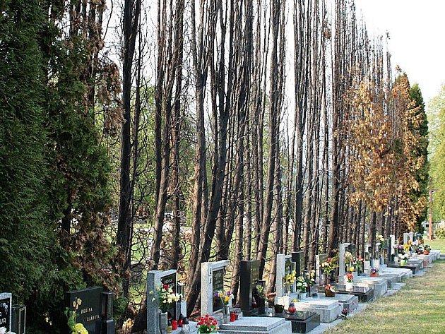 OHEŇ NIČIL. Po řádění požáru zbyly na hřbitově poničené hroby a šedesát vzrostlých tújí.