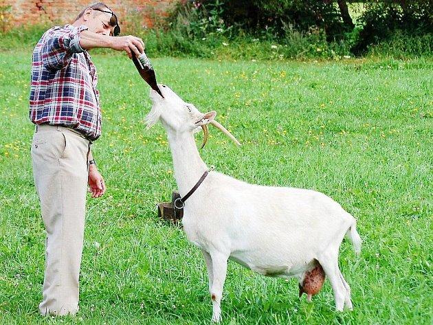 Jaroslav Telenický (na snímku) dopřává koze Líze pamlsky. Oblíbila si občas vypít trochu piva z lahve.
