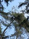 Z kroužkování orlů mořských na Tachovsku