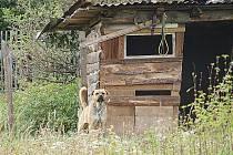 Tento pes rád utíká a napadá lidi. Jeho chovatel Vladimír Šiška ale říká, pes může volně pobíhat.