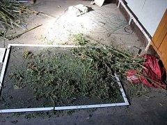 Kriminalisté našli 1,3 kilo marihuany.