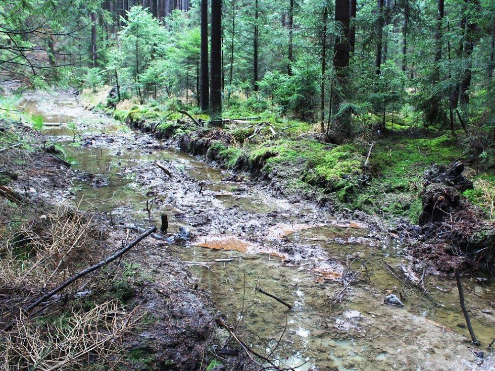 Pohled na nejsilnější a nejvzdálenější pramen. Zde by se dalo říci, že  na lesní cestě  skutečně pramení Tichá. Jde o nejmocnější zdroj vody na prameništi.
