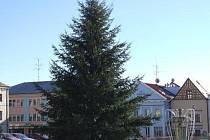 V TACHOVĚ stojí Vánoční strom od úterý