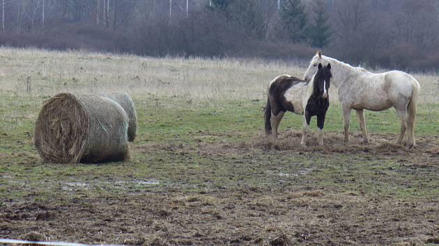 Koně na humnech milíkovských.