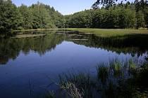 Rybník na Lučním potoce u osadya Lhota.