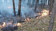 V okolí Pňovan došlo k rozsáhlému požáru lesa. Hasiči s ním bojovali i během středečního dne.