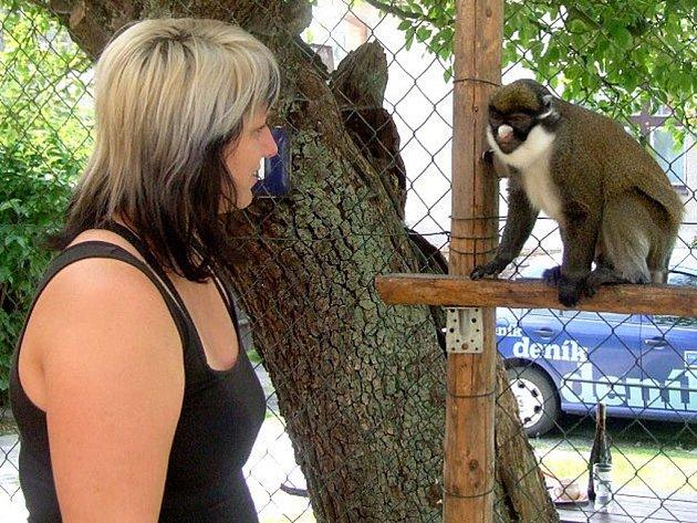 KOČKODAN Víťa ukazuje Julče, kde chce podrbat. Je to opravdu moc chytrý opičák.