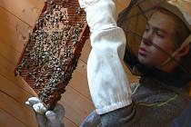 Ze soutěže mladých včelařů.