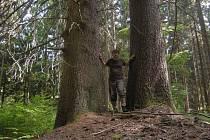 AUTOR SERIÁLU Přírodou Tachovska Miroslav Trégler u majestátních stromů v lese v okolí vrcholu Havran.